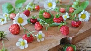 strawberries-1463806_1280